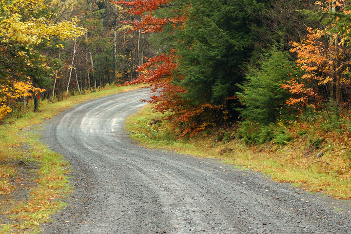 Autumn leaves along a forest road, Hunter Mountain, New York